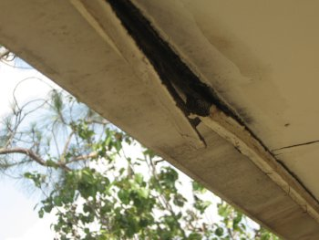 damage behind the gutter