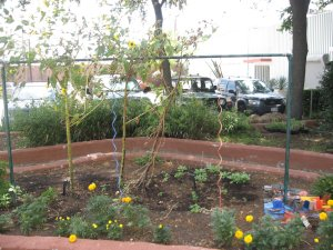 Creative garden trellis for vines