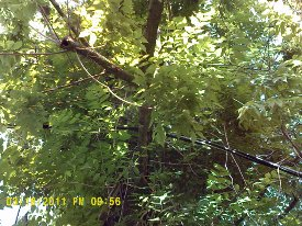 power line in tree