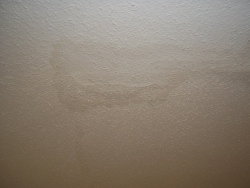 water stain ceiling