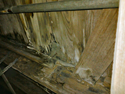 moisture damage under pier and beam